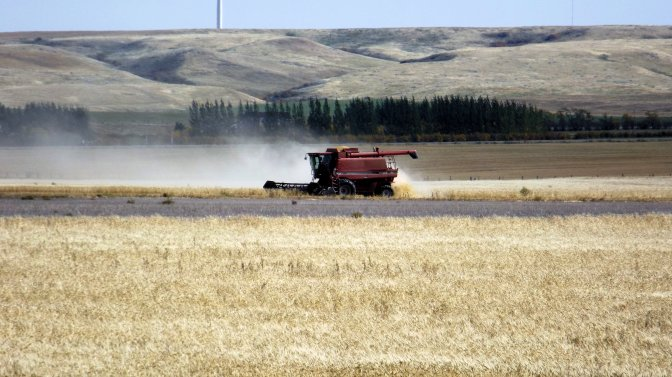 Crop Report for the Period September 27 to October 3, 2016 | News and Media | Government of Saskatchewan